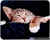"Imagem de Tapete de rato "" Sleepy Cat"""